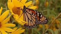 Monarch Flyway Mix - Monarch Flyway Mix