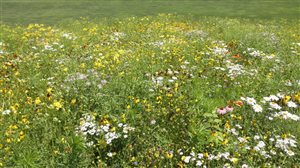 Stock's Wildflower Mix - Stock's Wildflower Mix