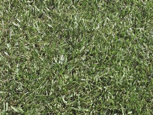 Defiance XRE Turf-type Tall Fescue Blend - Turf Type Tall Fescue