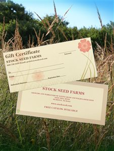 - Gift Certificate